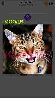 изображение крупным планом морды кошки 1 уровень 400+ слов 2
