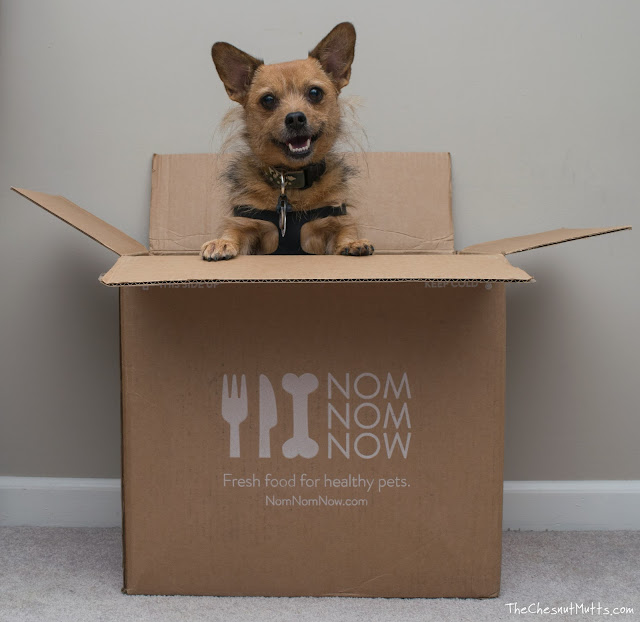 Jada in the NomNomNow box which reads Fresh Food for Healthy Pets