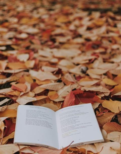 ACERCAMIENTOS Visiones de la patria muerta, libro de poemas de Nadia Contreras | Alfredo Loera, escritor