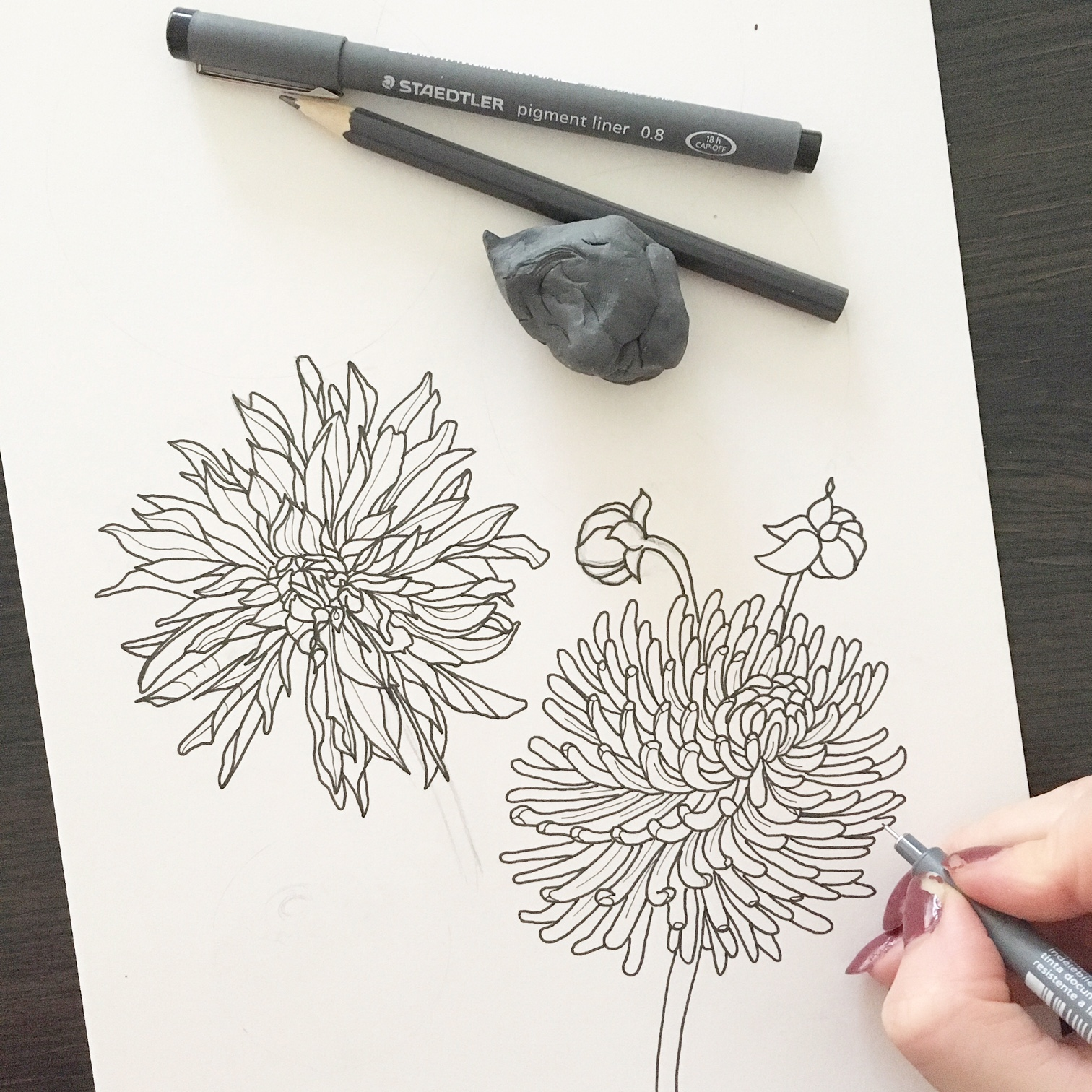 Kleurplaten Herfst Bloemen.Schilderijen Van Orchideeen Andere Botanische Werken Kleuren Voor