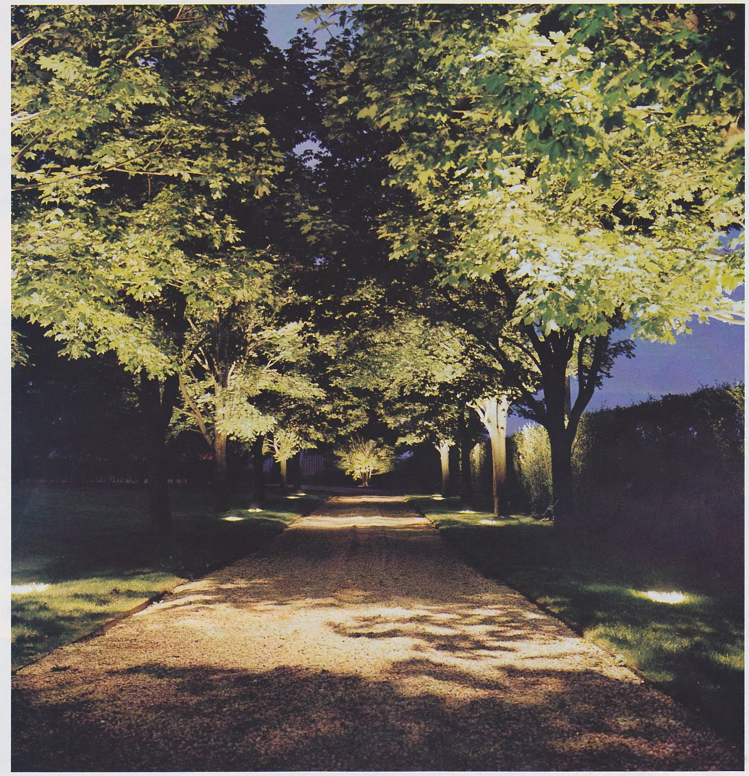 Up lighting trees down a driveway. & Landscape Lighting u2013 Greg Yale | Thinking Outside the Boxwood