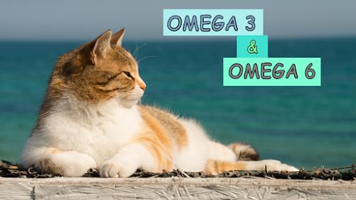 Omega 3 Kucing
