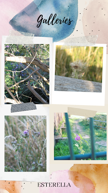 Collage of nature photos - including lilac flowers, grass blowing in the wind.