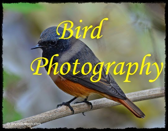 Bird Photography, Birds, Photography, Robin,