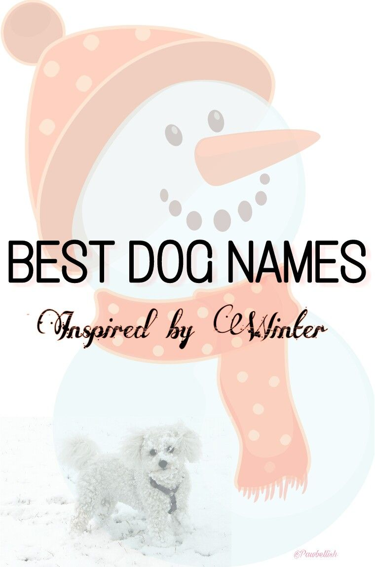 Find the perfect dog name for your new puppy in this list of dog names inspired by winter and the holidays of the season.