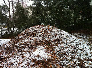 http://organicgardening365.com/three-reasons-you-should-be-composting-in-winter/
