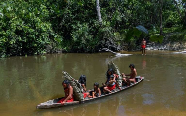 Indigenous peoples key to saving forests