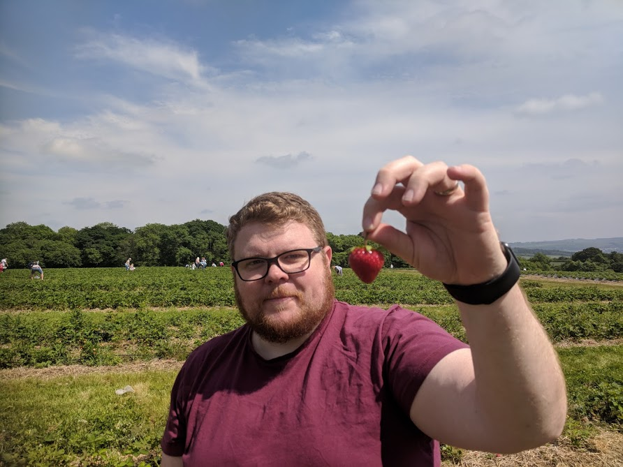 A Guide to Strawberry Picking at Brocksbushes in Northumberland  - strawberry in field