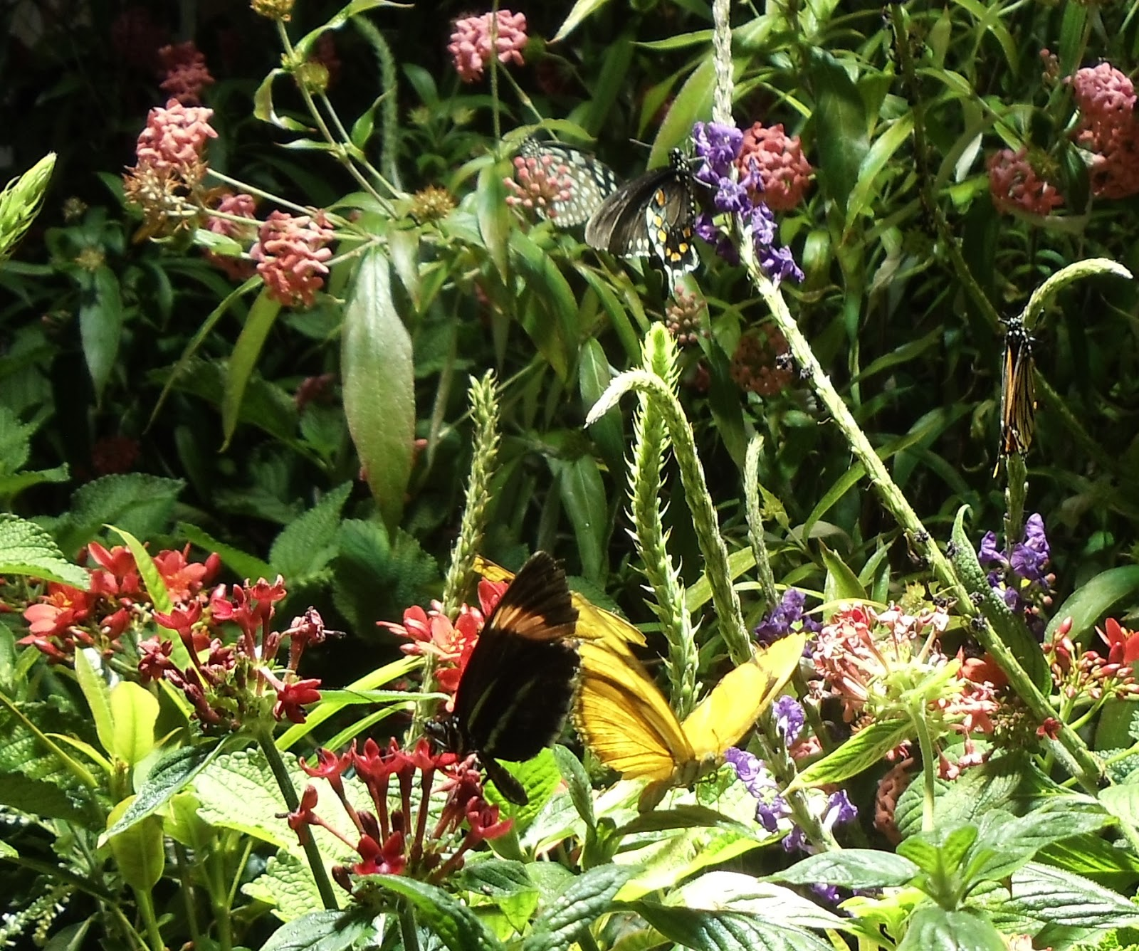 Butterflies landing on flowers