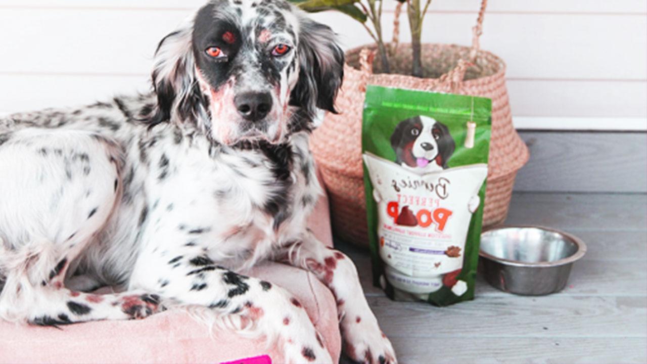 Good Dog Gut Health
