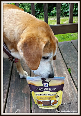 Dog with Hill's treats