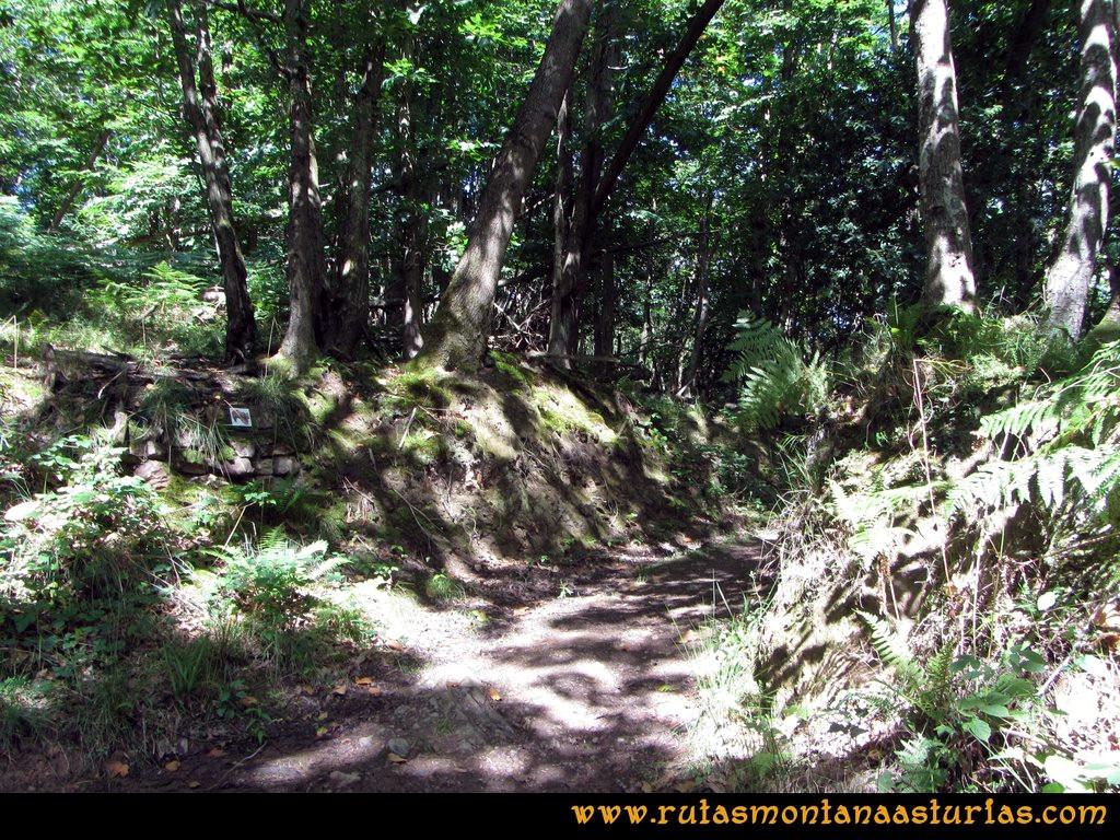 Ruta Cascadas Guanga, Castiello, el Oso: Tomando la ruta del oso