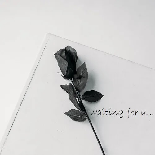 black rose with waiting for you message, Sad DP for girls