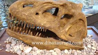 *A Dinosaursell é uma empresa especializada em venda de ossadas de dinossauros, eles vendem para o mundo inteiro, seja para museus, parques entre outros segmentos.