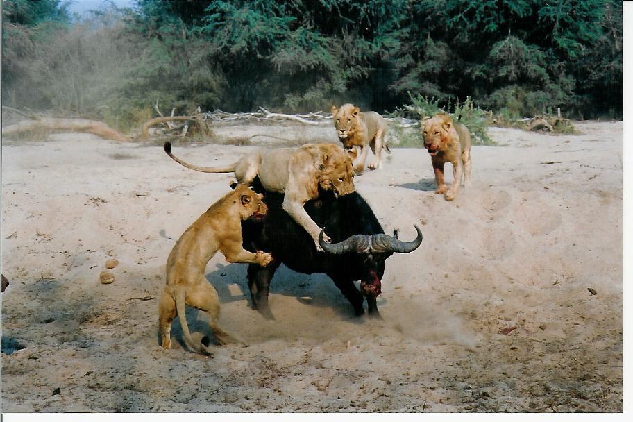 competitive relationship between animals