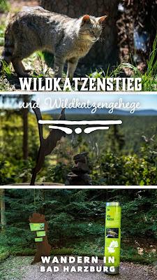 Wildkatzen-Walderlebnis und Wildkatzenstieg zum Wildkatzengehege Bad Harzburg | Wandern-Harz