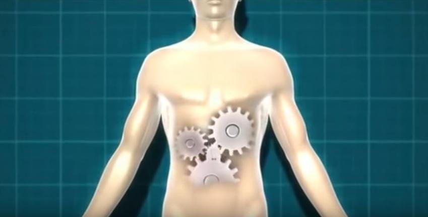 gambar ilustrasi sistem organ utama tubuh manusia