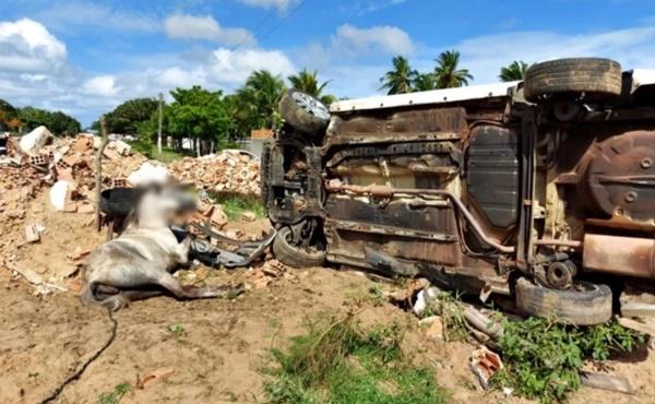 Carro capota e atinge dois cavalos na cidade de Parnaíba