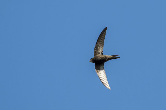 Common Swift 3