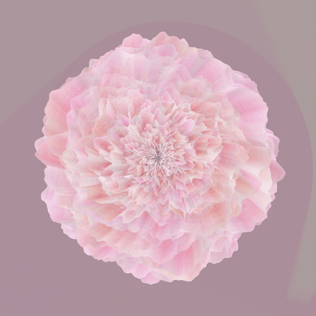 Full bloom flower that made with programming code.