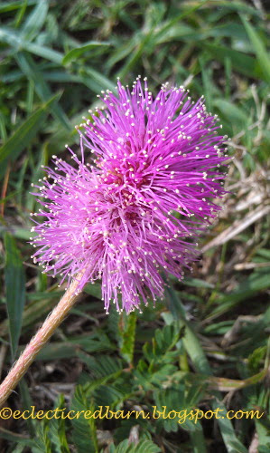 Eclectic Red Barn: Tiny pink wild flower