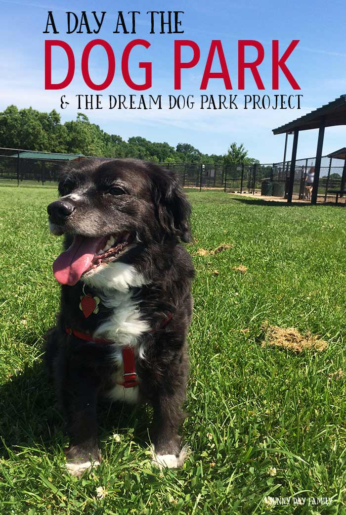 Life gets busy and one day I realized my dog wasn't getting the attention he deserved. We fixed that with a fun day at the dog park! See how and learn about the Beneful Dream Dog Park project - a way to help build & improve dog parks across the country!