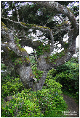 I look up into the contorted limbs encrusted with epiphytes.
