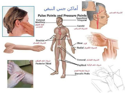اماكن جس النبض-تمريض بالعربي- نبض -اماكن حس النبض-نبض الطفال