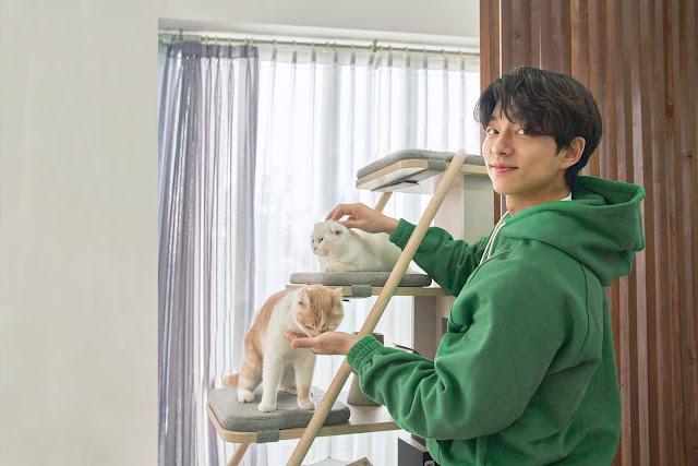 孔劉代言iloom-同居伴侶-貓爬架篇