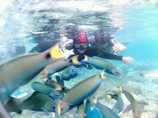 Kawanan ikan di Pulau Menjangan