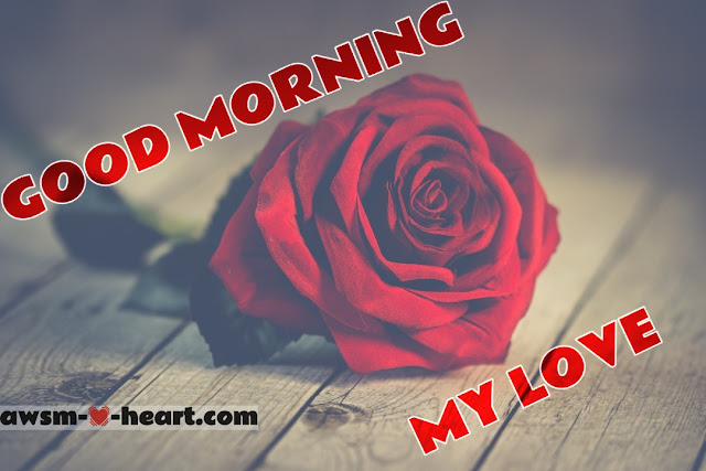 Good morning pics with rose flowers