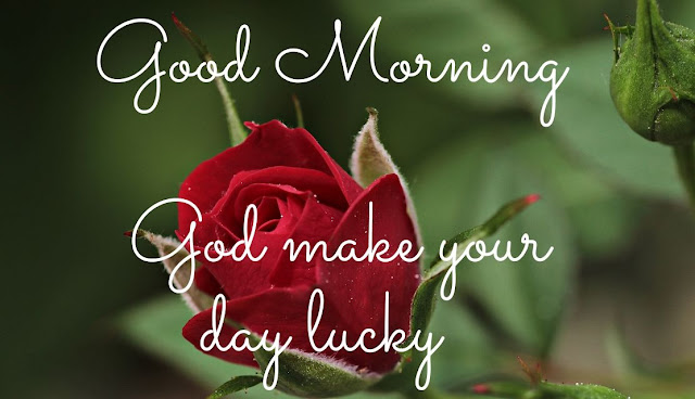 Good Morning God make your day lucky Red Rose Image