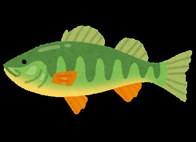パーチのイラスト(魚)