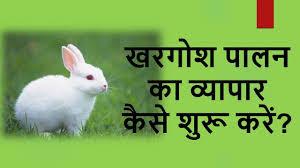 scope of rabbit farming in india