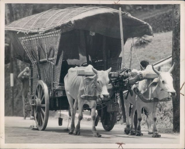 Bullocks Pulling a Covered Wag - India 1935