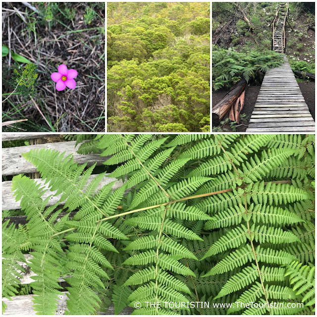 Fynbos, rerns and wildflowers at De Hoop Nature Reserve in South Africa