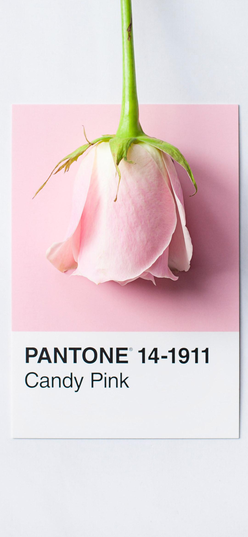 خلفية زهرة وردية اللون على ورقة بيضاء