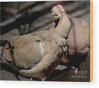This is a screen shot of print rendered on wood which I'm selling on Fine Art America. It features two very amorous Mourning doves. Info is @ https://fineartamerica.com/featured/cooing-mourning-doves-1-patricia-youngquist.html?product=wood-print