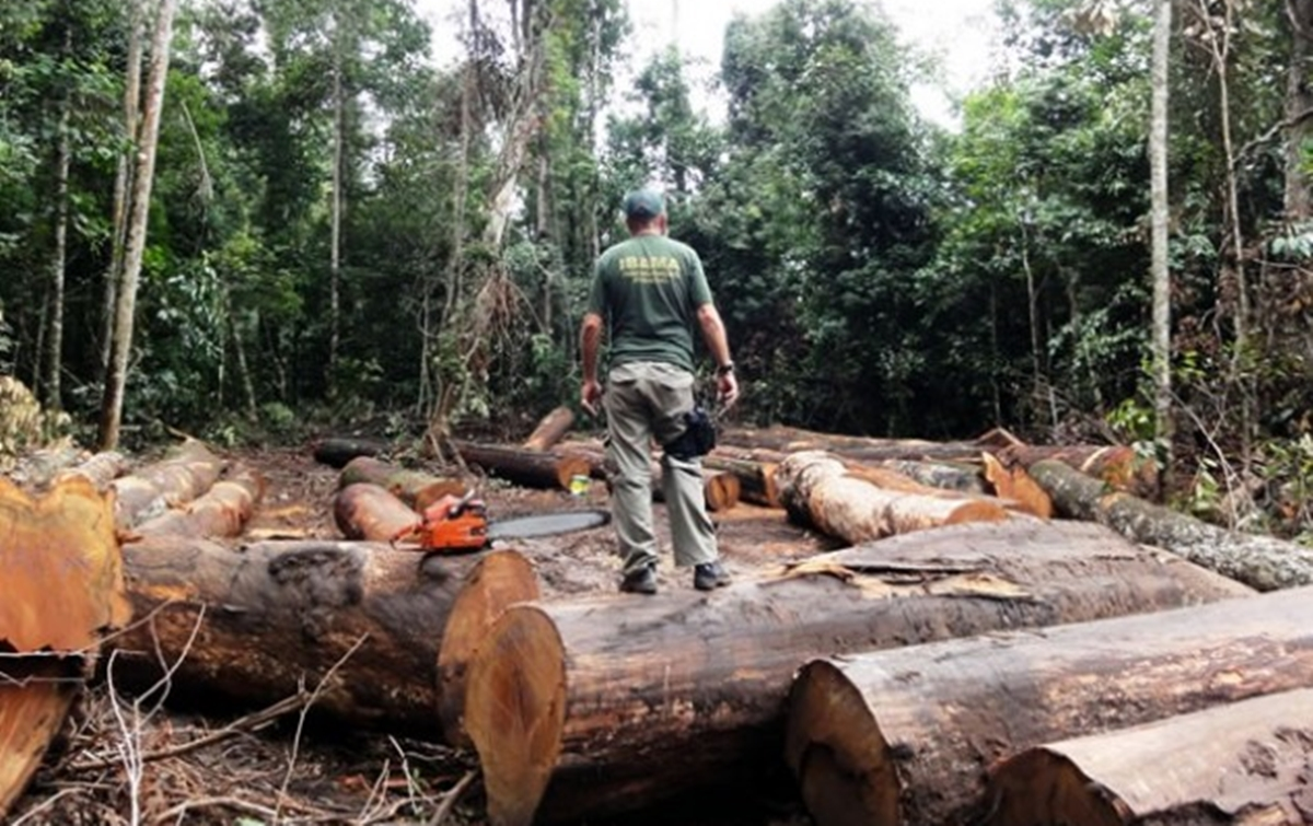 Desmatamento na Amazônia atinge maior valor para o mês de abril em 10 anos