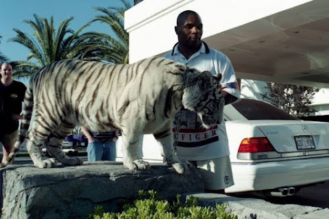 Tyson and his tiger @ htpps://exceldomus.com
