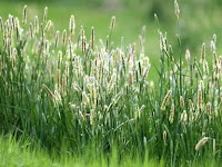Cara Memberantas Rumput Liar Sangatlah Mudah Cukup Menggunakan Bahan Berikut Ini!!