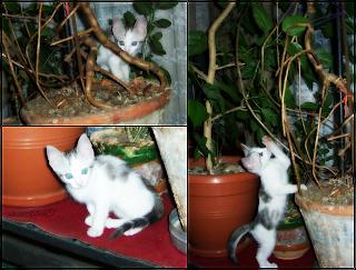 Puiu M, 1 month old.