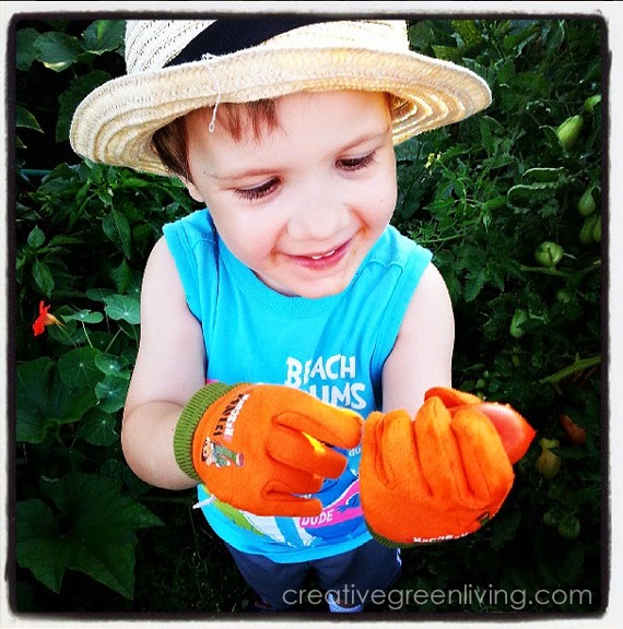 Young boy wearing a hat looking at a homegrown tomato in the garden