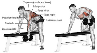 Top 5 Exercises For Building Wide Muscular Back, Single-Arm Dumbell Row