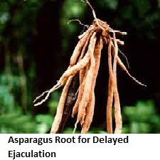 Asparagus Root for Delayed Ejaculation