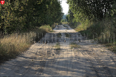 Цыгань. Куропатки бегут по проселочной дороге