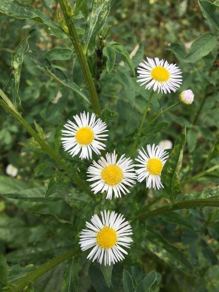 Floricele pe campii