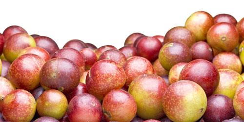 camu camu fruta