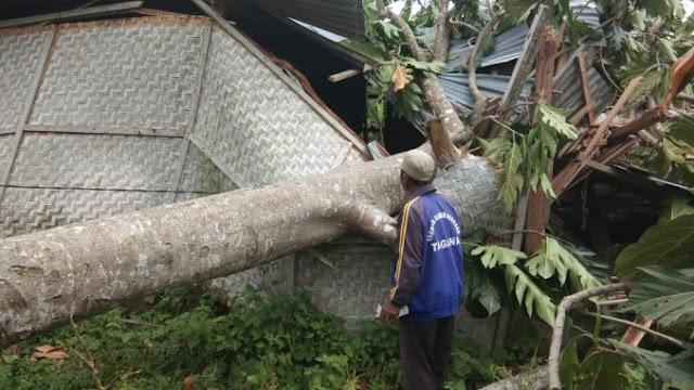 6 Rumah Warga di Lombok Tengah Hancur Ditimpa Pohon Tumbang, Waspada Angin Kencang!