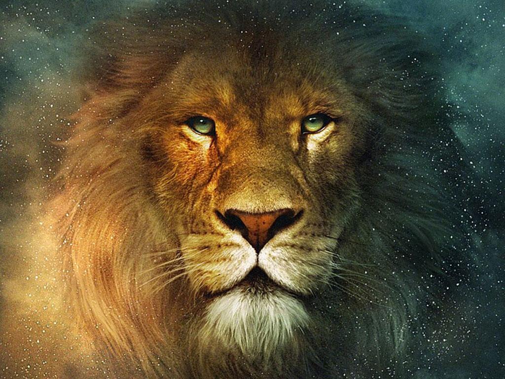 Hd wallpaper lion - Lion Hd Wallpapers Free Download Lion Desktop Pictures Full Hd